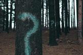 den-wald-vor-lauter-bäumen-nicht-mehr-sehen-foto-von-evan-dennis-i-auf-unsplash