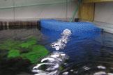 Hamburger Mattenfilter bringen nicht nur Sauerstoff in das Aquarium ein...