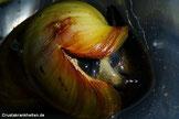 Solche Risse sind für Schnecken lebensbe-drohlich. Foto: Holger Haake