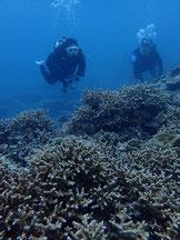 石垣島でのんびりダイビングエダサンゴに囲まれ