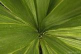 Blätter in unterschiedlichen Grüntönen