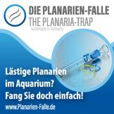 Bei einer größeren Planarien-Invasion sollte man vor einer Medikamentenbehandlung die Plagegeister vorab erst mit einer Planarienfalle einfangen.