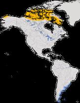Karte zur Verbreitung des Weißbürzelstrandläufers (Calidris fuscicollis)