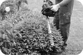 Temporärbüro für Landschaftsgärtner