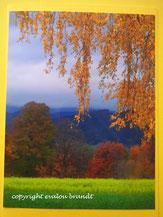 Herbststimmung Birke