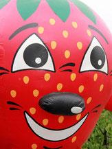 Erdbeerfeld Erdbeeren Selbst pflücken in Pieterlen