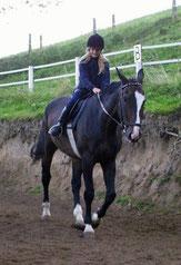 Auf dem größten Pferd der Reitschule