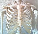 福岡市の本当に結果の出る肋骨矯正