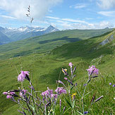 Strahlen Lugnez Schweiz Switzerland Topas Bergkristall Pyrit rockhounding