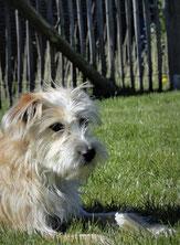 Anya Gesicht von  Anya & Co.  Schönes für den Hund