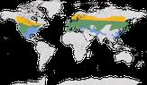 Karte zur Verbreitung der Waldohreule (Asio otus)