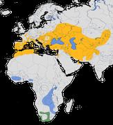 Karte zur Verbreitung der Bienenfresser (Merops apiaster)