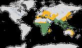 Karte zur Verbreitung der Familie der Racken (Coraciidae)