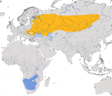 Karte zur Verbreitung des Rotfußfalken (Falco vespertinus)