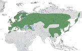 Karte zur Verbreitung des Buntspechts (Dendrocopos major)