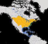 Karte zur Verbreitung der Katzenspottdrossel (Dumetella carolinensis)