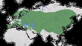 Karte zur Verbreitung des Uhus (Bubo bubo)