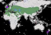 Karte zur Verbreitung des Steinkauzes (Athene noctua)