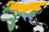 karte zur Verbreitung der Schwarzkopfmöwe (Ichthyaetus melanocephalus)