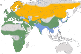 Karte zur Verbreitung des Turmfalken (Falco tinnunculus)