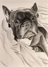 tierportrait zeichnen lassen kunst meiner seele