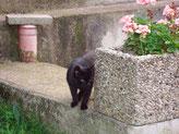 Gartenkatzen in Bochum