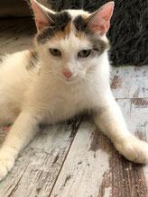 Katzenmutter Anouk