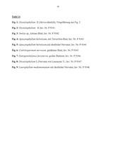 Tafel 11