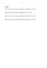 Tafel 16