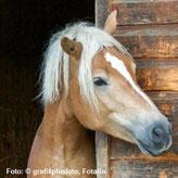Pferdeportrait, Foto: © grafikplusfoto, Fotalia