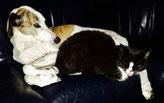 Hunde- und Katzenporträt