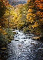 Landschaft mit Fluss und Bäumen