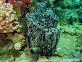éponge, noire, surface microconulée, oscules