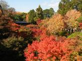 H24・11/12 東福寺の紅葉