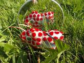 rot gepunktetes reflekTIER vorm Spiegel