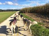 Welch herrlicher Trail! (Foto Noemi Z.)