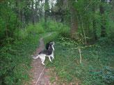 ...durch Waldwege rasen...