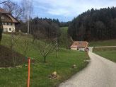 Nachbars Frühlingsgarten