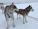 Yukon mit Ice im Swing