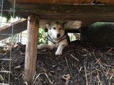 Borea kontrolliert den neuen Komposthaufen