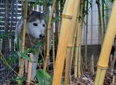 Ich im Bambuswald
