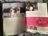 Dog-Zeitung für Merkur