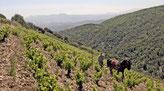 (Foto: Rare Wine)