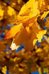 Herbststimmung auf dem Goldockerhof bei Rumpenheim