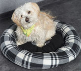Friseurhund Sissy