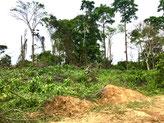 Blu Karb usa resíduos florestais para produzir carvão vegetal