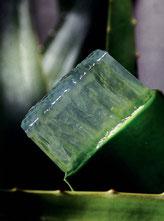 L'aloe vera et l'acemanan stimule la régénération cellulaire et le métabolisme, ayant comme résultat l'élimination des toxines et des poisons par voie intestinale.