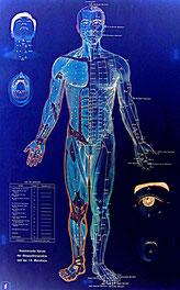 Ganzheitliche Medizin Energieleitbahnen als Regelkreise des Menschen