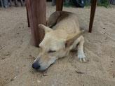 Bild: Mein Wachhund