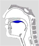phase préparatoire orale